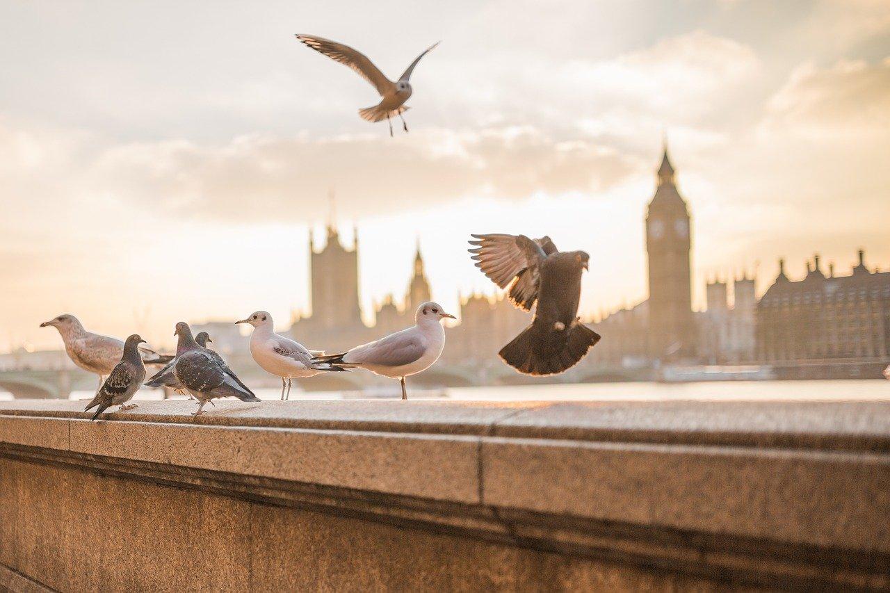 Quelle solution pour éloigner les pigeons de votre résidence?